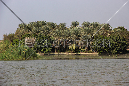 a photo for the river Nile showing one side , trees , palm trees , Cairo, Egypt