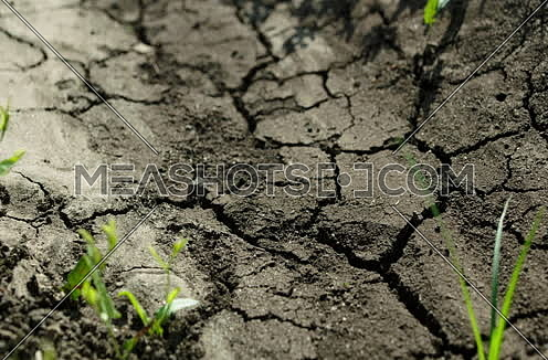 Close shot for water move into soil