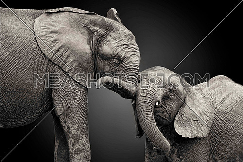 mother elephant with baby elephant isolated on dark background representing motherhood concept