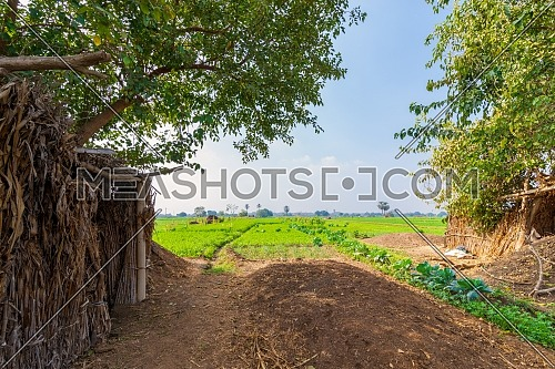 Green meadow, blue sky with few clouds framed by large green trees with few trees at the far end at traditional Egyptian village