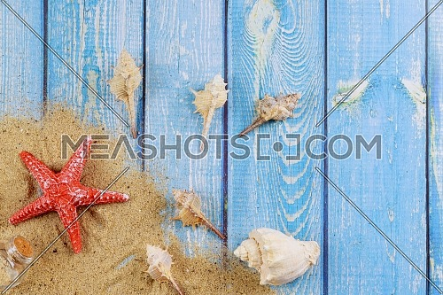 View of beach sand with shells and starfish summer season vacation