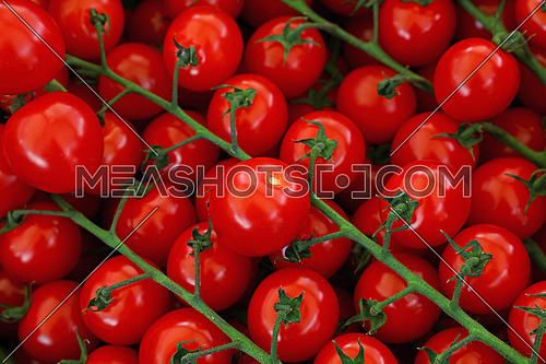 Close up fresh red cherry tomatoes on green branch at retail display of farmers market, high angle view