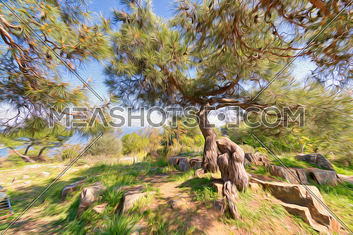 Beautiful summer landscape, with Photoshop effect of picturesque glade at seaside with pine tree with curved trunk and sprawling branches growing next to stones with blue sky and sea in background