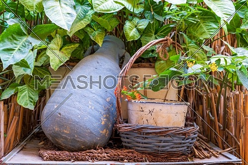 Blue pottery container and wicker basket on background of wooden cage, green leaves and assembled reeds