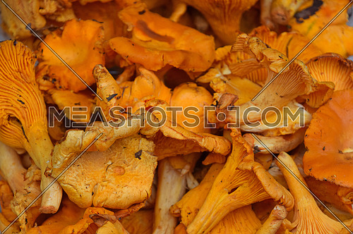 Fresh yellow forest girolle or chanterelle edible mushrooms (Cantarellus cibarius) at retail market display, close up, high angle view