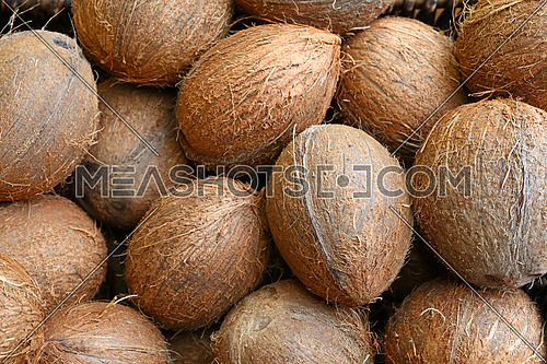 Group of small whole fresh brown coconuts on retail market, close up, high angle view