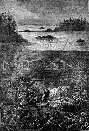The main inhabitants of the land during the Devonian period. The world before the creation of man, vintage engraved illustration. Earth before man – 1886.