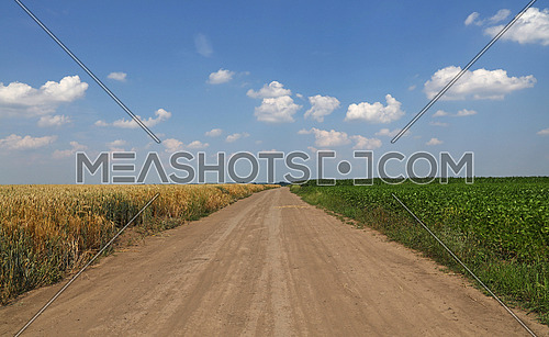 Landscape in rural farming area with earth ground road to horizon between two different agricultural fields, green soy and wheat or rye, cloudy blue sky, central perspective