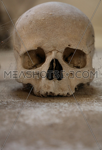 Close up of old human skull with cobweb, low angle view