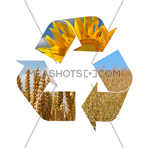Illustration recycling symbol of agriculture crop, sunflower, wheat, rapeseed, isolated on white background