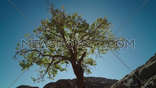 Low angel for almond tree with sun flares in Sinai Moutain at day.