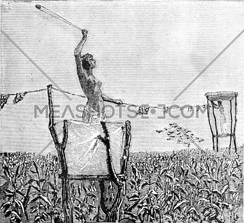 Woman protecting the crops in a field from birds using a slingshot. From Travel Diaries, vintage engraving, 1884-85.