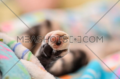 A close up of a cat's feet sleeping on a blanket