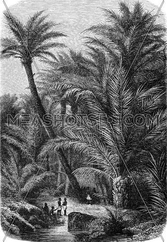 Palm group, vintage engraved illustration. Magasin Pittoresque 1869.