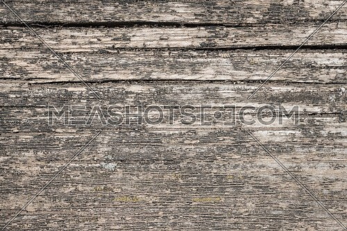 Hardwood tree cutting trunk backgrounds, natural cut stump wooden texture and timber patterns.