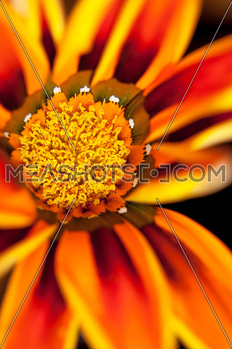Bright orange flower leaf with close up reverse ring