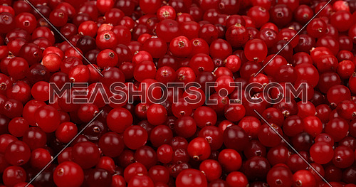 Fresh red ripe cranberries background close up, low angle view
