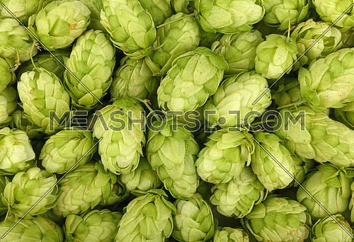 Close up full frame background pattern of fresh green hops, ingredient for beer or herbal medicine, elevated top view, directly above