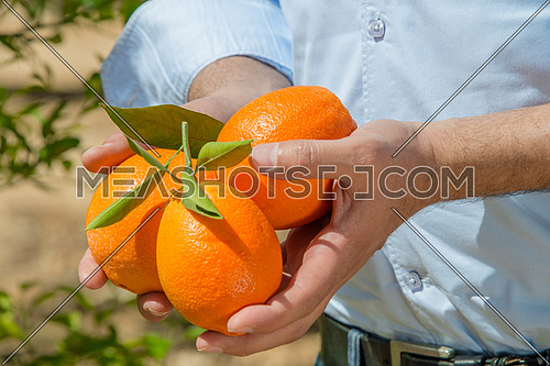 A farmer holding oranges in his hands