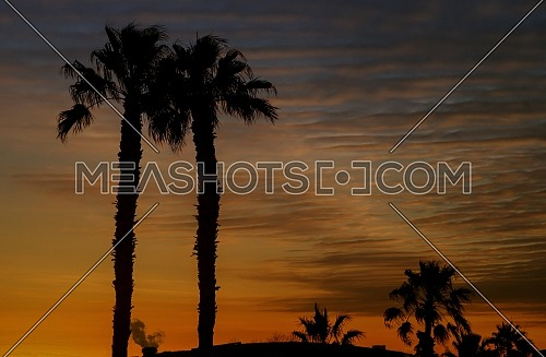 Silhouetted Miami palms trees with colorful sunsets
