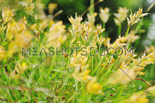 gras and flowers background at raint