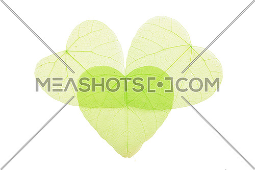 Group of three green heart shaped dried skeleton leaves decoration with overlap isolated on white background