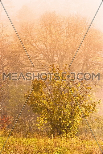 Magic golden early morning nautre scene at autumn fall season rural area