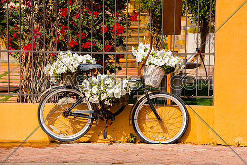 An abandoned bicycle on the side of the road with white flowers on it