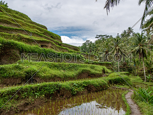 BALI,INDONESIA ,6 AUGUST 2018: Beautiful rice terraces in the morning light near Tegallalang village