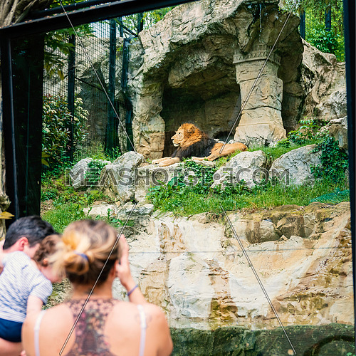Woman shooting a photo to a Lion at the zoo through the window. Family time at zoo.