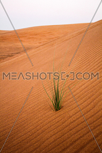 green plant in the middle of the desert