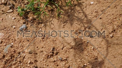 Ants heading to an anthill, macro plane vista Zenith