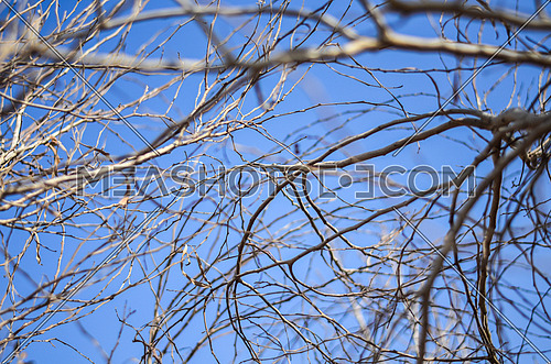 tree branches filling the frame in front of blue sky