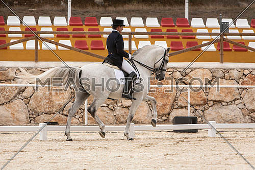 Valdepeñas de Jaen, Jaen province, SPAIN - 10 october 2008: Spanish purebred horse competing in dressage competition classic in La Beata, mounted by Spanish Olympic champion Jose manuel Muñoz,  Valdepeñas de jaen, Jaen province, Andalusia, Spain