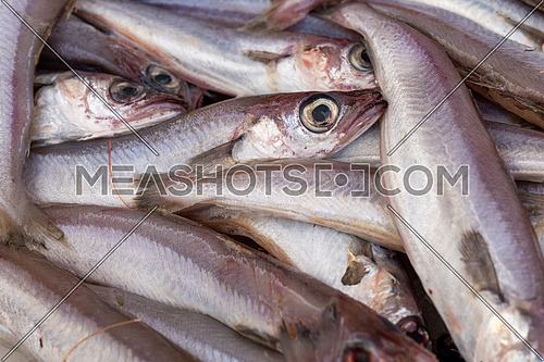 Stack of fresh Merlangius merlangus, commonly known as whiting or merling, This fish is similar to the hake, sold it at market.