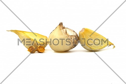 Elephant garlic (Allium ampeloprasum) bulb with corms and separated cloves prepared for planting over a white background