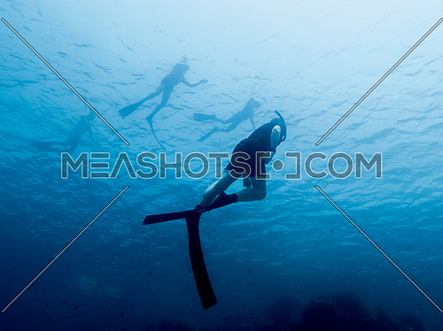 Free divers in blue water
