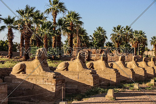 a photo for Luxor temple in Luxor city, Egypt