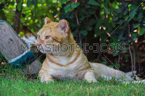 A cat with scratch marks on the face in a garden outdoor