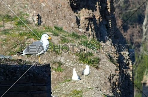 seagulls on the walls of the Baths of Caracalla in Rome