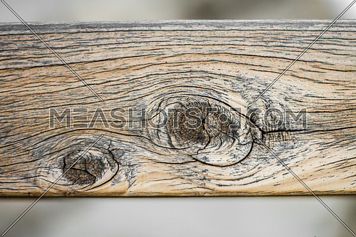 Texture of an old wooden log showing wood nodes
