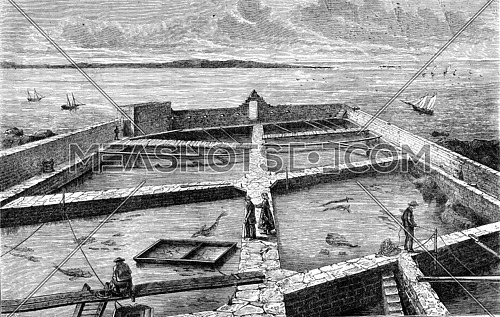 The former fish farm at Concarneau, vintage engraved illustration. Magasin Pittoresque 1869.