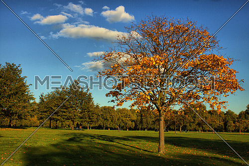 landscape in Hayd park London