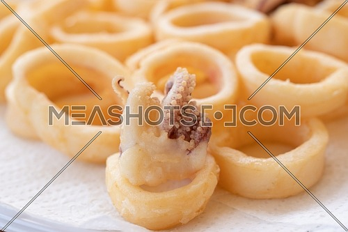 fried squids or octopus (calamari) close up, isolated on white background