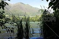 Tranquil lakeside scene in the mountains with water grass moved by water in the foreground
