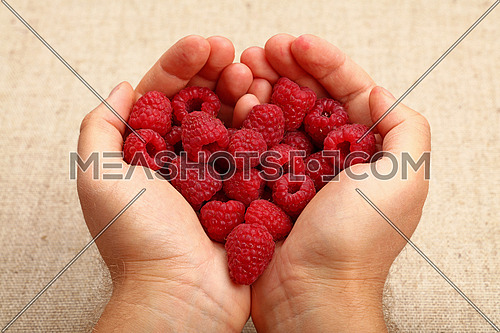 Two man hands with heart shaped palms holding handful of red ripe raspberries over canvas, close up, high angle view, personal perspective