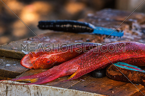 Two red fish lying on a dirty wooden shaft are ready to be cleaned.