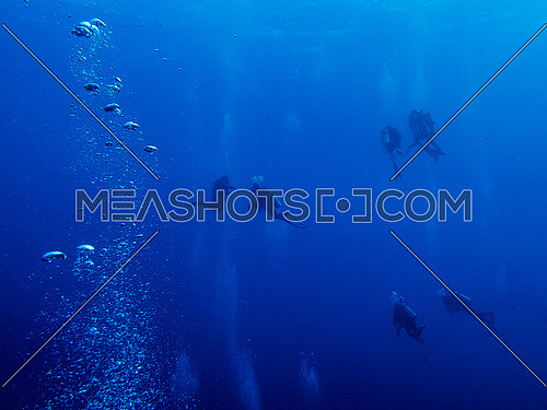 Divers under the deep blue water in the red sea Egypt
