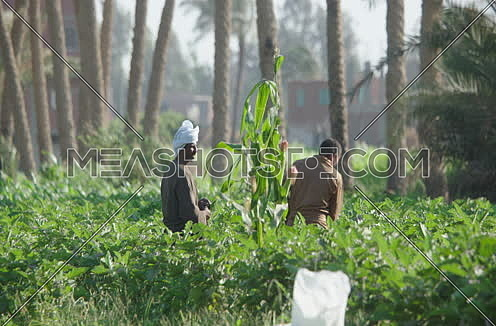 Two Male Farmers working in field