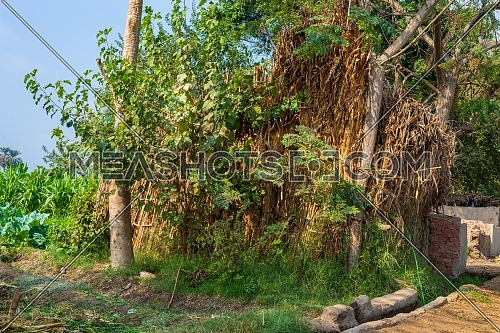 Exotic bamboo rocked hut without windows with straw roof surrounded by tropical green trees and grass at traditional Egyptian village on sunny day